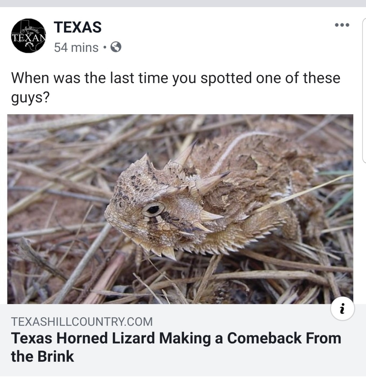 Texas Horned Lizard. https:// texashillcountry . com/texas-horned-lizard-comeback/ join list: Texas (166 subs)Mention History.. As a native Texan that used to find and mess with these guys a lot as a kid, this warms my heart immensely.