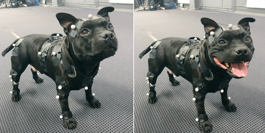The best motion capture boy.. join list: CuteDogs (237 subs)Mention History.. Such a cute truck.