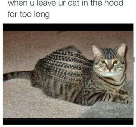 """""""The thug life chose me, gato"""". """"The thug life chose me, gato"""". for too long. when yo pussy high af"""