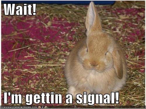 The Radar Rabbit. This Rabbit can sense a truck backfiring.....FROM 10 MILES AWAY!!!!.