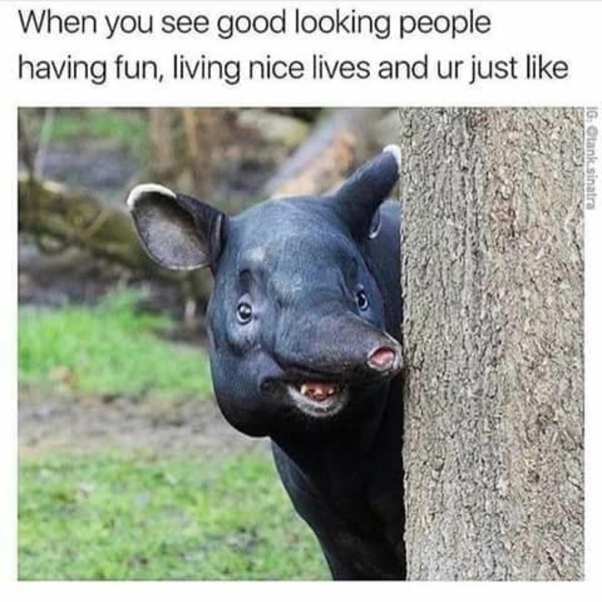 Tultosci Xiclovotru. . anus.. Is that an elephant pig?