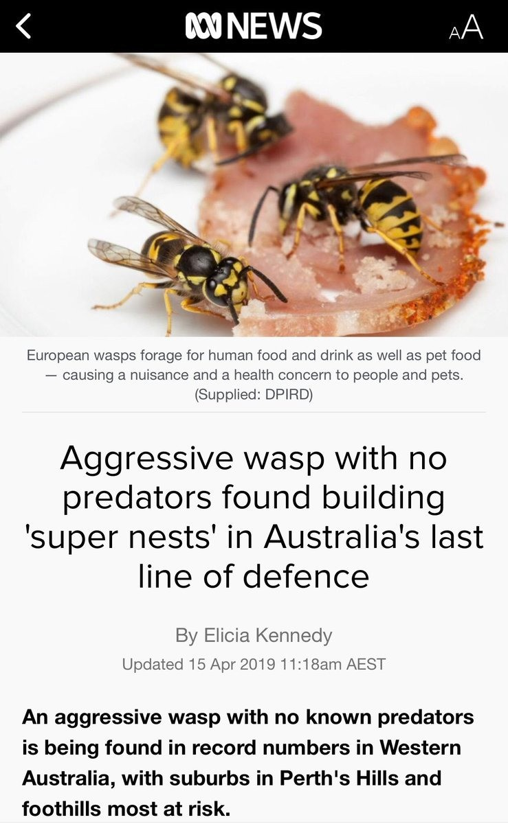 unsightly previous Chinchilla. .. European wasps in Australia, Asian hornets in Britain and genetically modified killer bees in America... This is not how I imagined the end of the world.