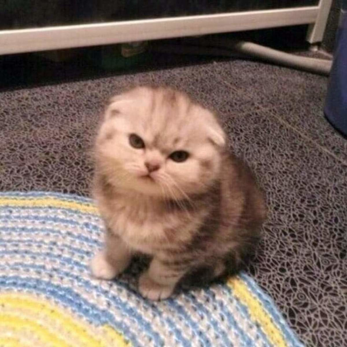 """""""..where did you put my catnip? >:c"""". join list: DoseOfCuteness (542 subs)Mention Clicks: 64292Msgs Sent: 758486Mention History.. Little looks angry about something"""