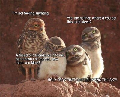 Woah.... I like owls.. rm not feeling an-. rating Yea, me manner. whenhe' d you get Ills stuff siege? ruu Mike? '. I'm not feeling anyhting