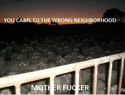 You came to wrong neighborhood!. . YOU CAME TO THE WRONG NEIGHBORHOOD. i see what euw did there ..