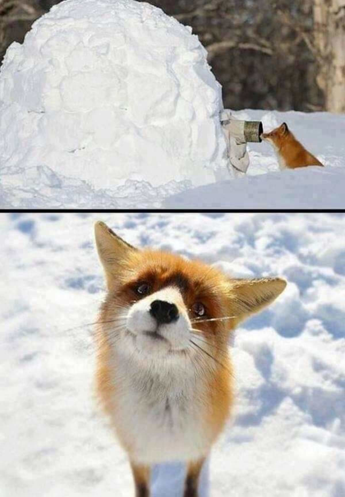"""""""..you know i can see you...do you?"""". join list: DoseOfCuteness (553 subs)Mention History.. Did they dead ass build a igloo for taking photos? Dope"""
