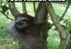 Fabulous sloth