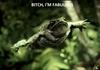 Fabulous frog