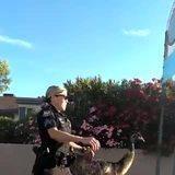 Police returning lost pet