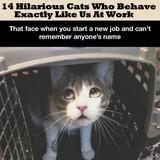 Cats who behave exactly like us on work