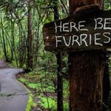 Here Be Furries