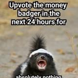Money badger