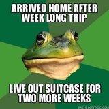 Bachelor Frog