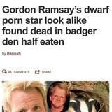 Raccoon Sosig