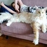 Big catto